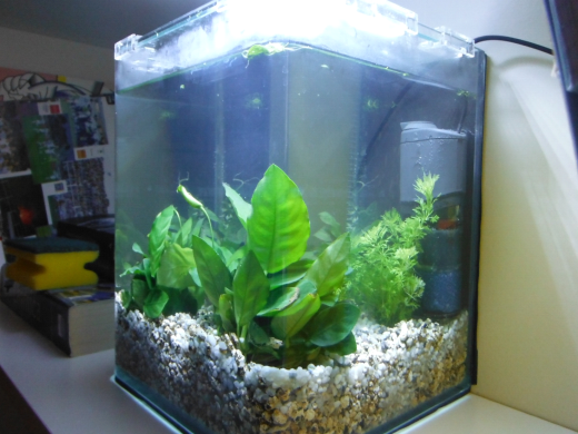 allestimento di un cubo - Allestimento Acquario Per Betta Splendens